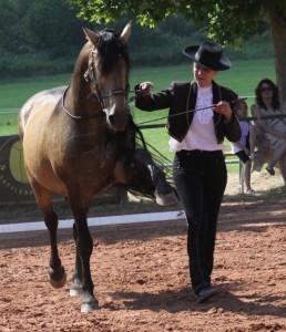 Faszination pferd 2013 182