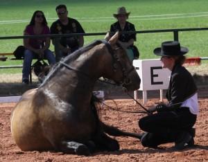 Faszination pferd 2013 187
