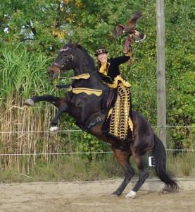 Falken und Pferde! (Fàscino 2014)