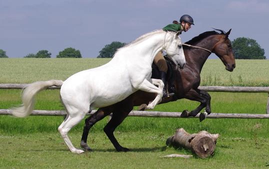 was ich so mit pferden mache…  nicht flüstern  zuhören