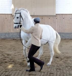 Galopp-Pirouette