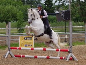 auch ein Barockpferd kann springen!