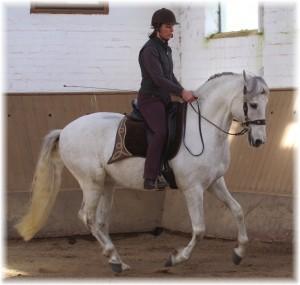Dressurmäßige Gymnastizierung (Merlin 2013)