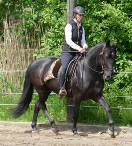 anlehnung pferd verbessern